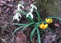 Prírodná záhrada vo februári. Vlastné priesady. A recept