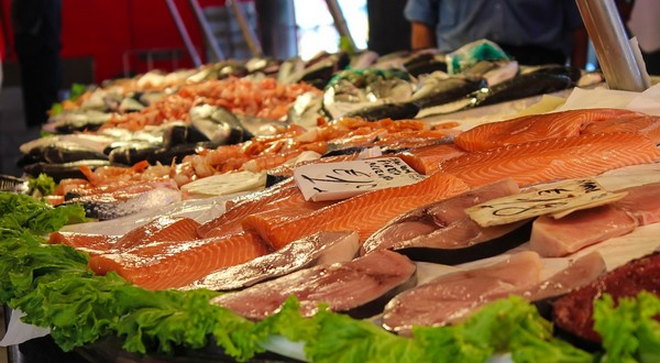 ryby losos