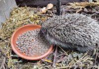 Prírodná záhrada v júli. Bylinky, plodobranie a ježkovia