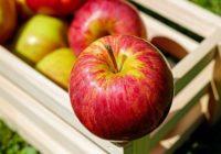 Samozber jabĺk. Chutné, zdravé a lacnejšie