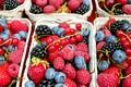 samozber ovocia