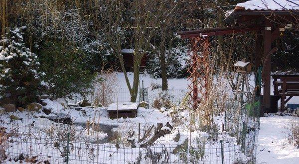prírodná záhrada v decembri