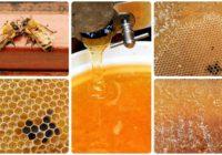 Milan Kozický: Kvalitný med je výsledkom fortieľu askúseností majstra včelára
