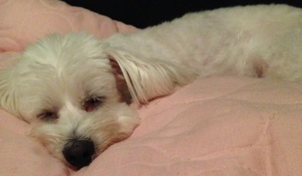 Lara pes spí