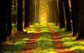 Čo možno odhadzovať vlese podľa skúseného lesníka?