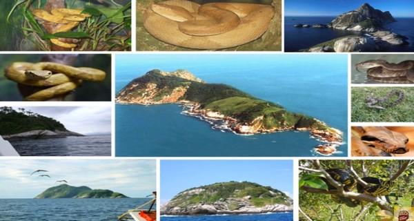 Ilha da Queimada Grande ostrov hadov