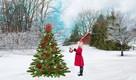 tradície vianočný stromček