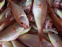 ar ryby
