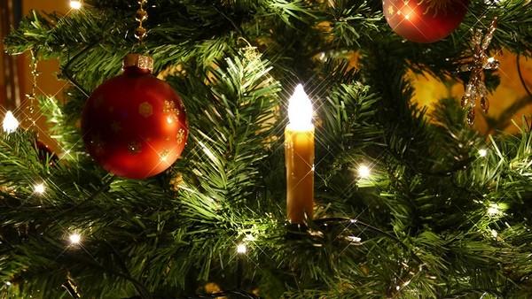 Ako si správne vybrať vianočný stromček