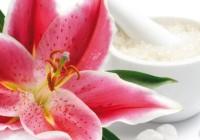 Zázračné látky vrastlinách pre vaše zdravie a krásu