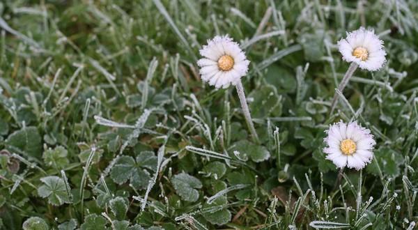 trávnik v zime
