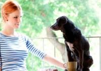 Kristína Farkašová a tajomstvo šťastného vzťahu psa a človeka
