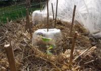Zemiaky v slame – ako na to? Prírodná záhrada v marci