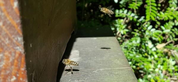 včely úľ