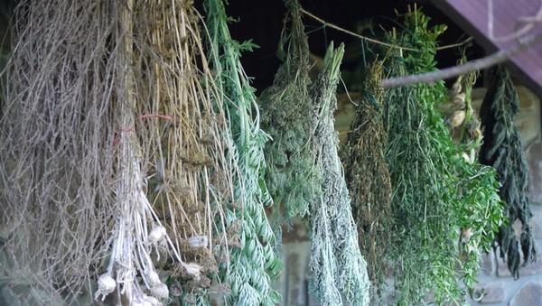 bylinky sušenie