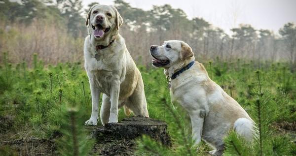 psy a geopatogénne zóny
