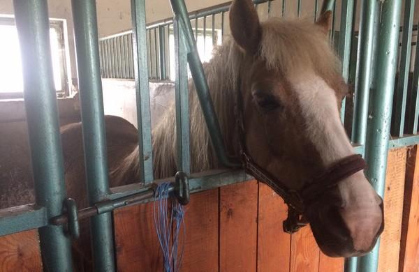 farma hrubá borša kone