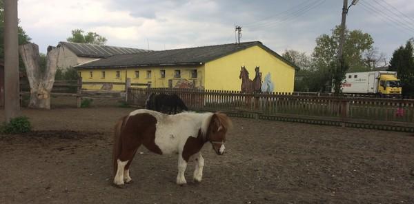 farma hrubá borša poník