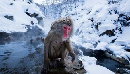 snežné opice čistenie