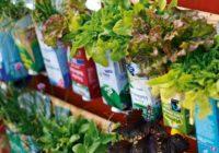 Náš zelený tip: bylinková ašalátová stena