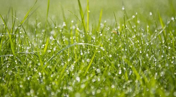 ako správne zavlažovať trávnik