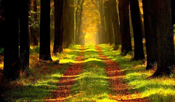 čo odhadzovať v lese