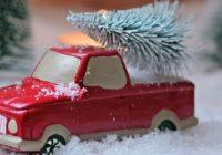 Život vianočných stromčekov pred apo Vianociach