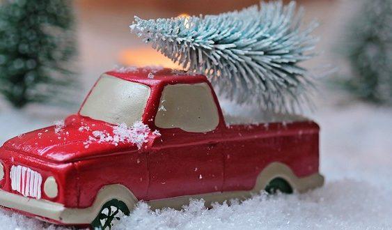 život vianočných stromčekov