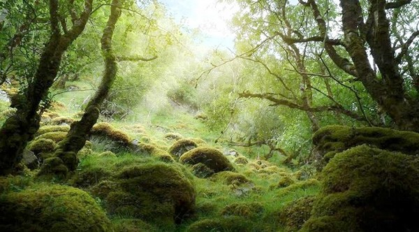 Badínsky prales