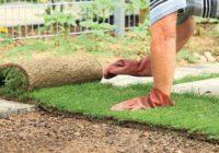 Trávnikový koberec. Výhody, príprava ajeho položenie