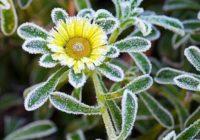 Ako chrániť záhradu pred návratom mrazov? Radia odborníci