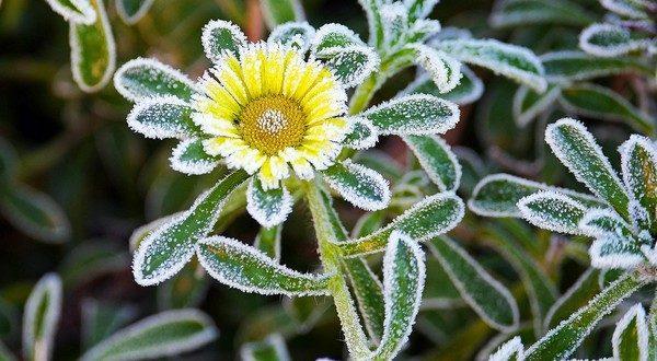 ako chrániť záhradu pred mrazmi