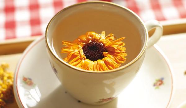 nechtíkový kvet v šálke
