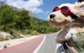 Cestovné poistenie po novom. Výhody a užitočné tipy