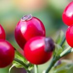 Domáci šípkový sirup pre vašu imunitu | RECEPT