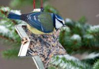 Kŕmenie vtákov. Ktoré čo žerú a ako im namiešať krmivo?