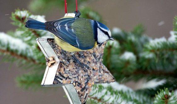 kŕmenie vtákov