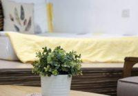 Ktoré izbové rastliny vyčistia a zvlhčia doma vzduch?