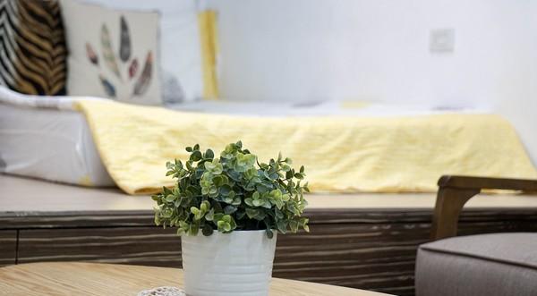 izbové rastliny čistia a zvlhčujú vzduch