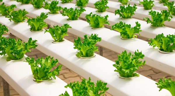 ako pestovať bylinky aj v zime
