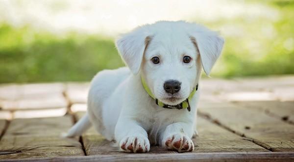 7 mýtov o psoch