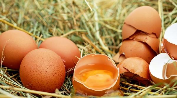 salmonela vo vajíčkach