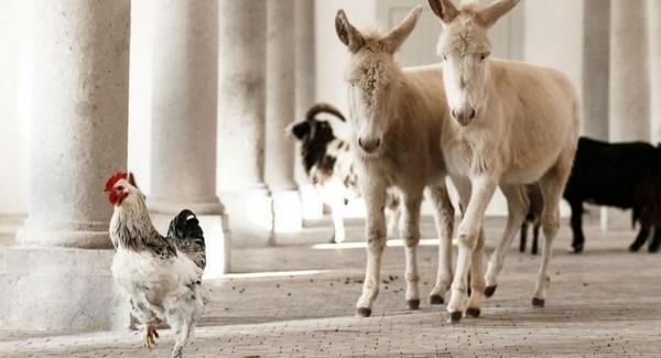 zvieratá na Schloss hofe
