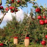 Čo sadiť kovociu a zelenine, aby ste mali dobrú úrodu?