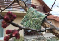 Dravé roztoče. Účinná eko ochrana pre vašu záhradku