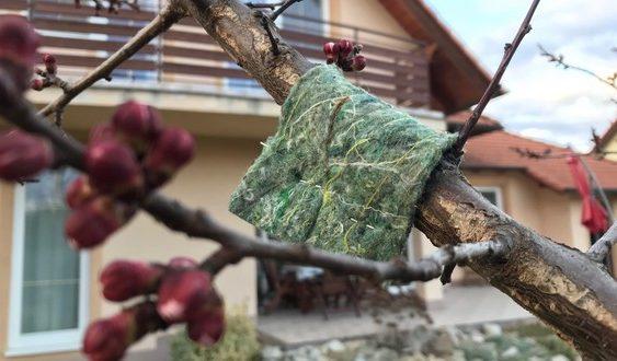 dravé roztoče pásy na strome