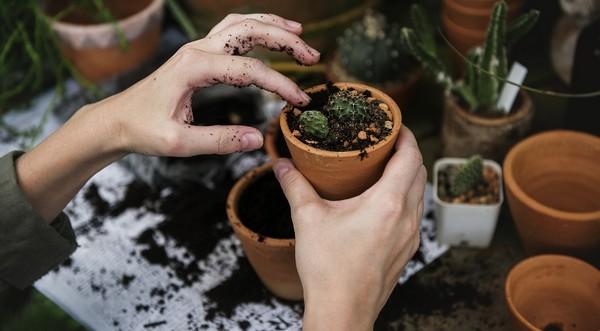 vhodný substrát pre rastliny