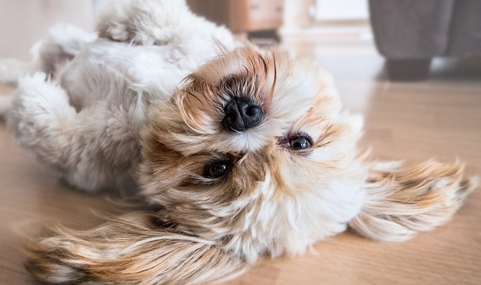 pes v pohode