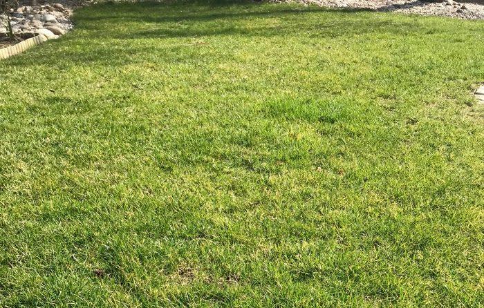 trávnik na jar treba vertikutovať