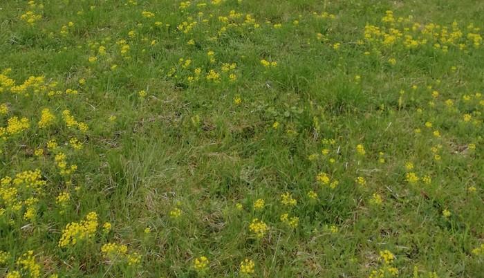 trávnik lúka